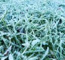 Frosted lawn in Winter